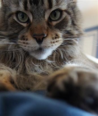 jos-zoomer-cat